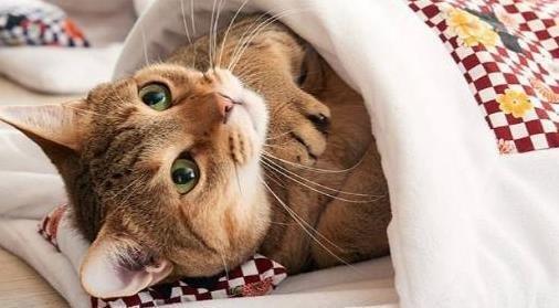 猫咪冬季如何保暖?如何让猫咪温暖过冬